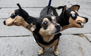 66c5b30fd9c77c9a746575669a5c63b5-the-least-scary-scary-dog-halloween-costumes